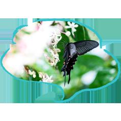 蝶々も集まる大自然